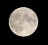 Moon_20080420